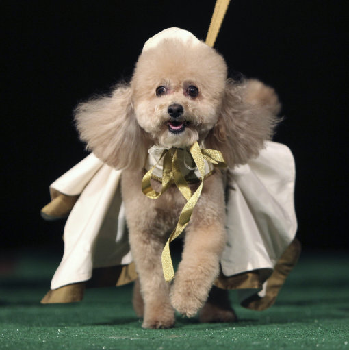 Dog Fashion Show 2012 New York – Pictures